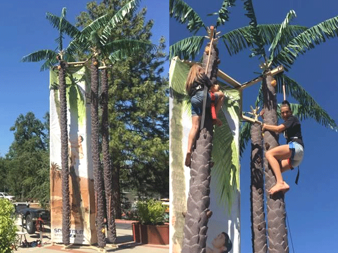 Coconut Tree Climb Rental
